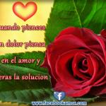 Imágenes de rosas rojas con frases de amor