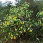 Imágenes de Plantas autóctonas – especies nativas de Argentina