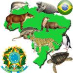 Imágenes de Animales en via de extinción y especies extintas
