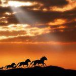 Hermosas imágenes de Caballos Salvajes, fotos de animales maravillosos