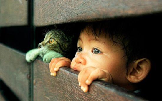 bebes y niños con gatos  (10)