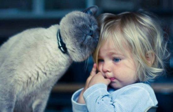 bebes y niños con gatos  (18)