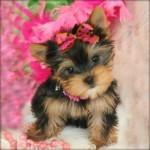 Imágenes de Perros bonitos, los Cachorros más tiernos