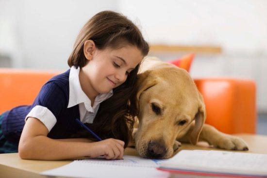 niños y bebes con perros  (16)