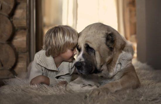 niños y bebes con perros  (18)