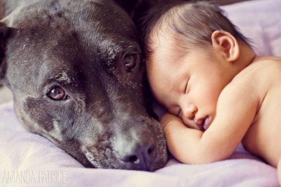 niños y bebes con perros  (19)