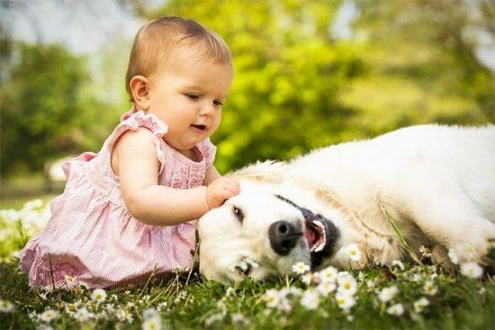 niños y bebes con perros  (2)