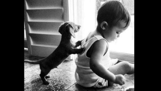 niños y bebes con perros  (23)