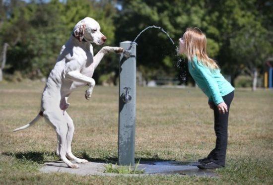 niños y bebes con perros  (5)