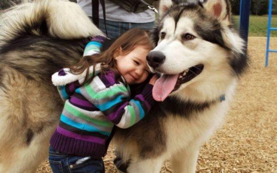 niños y bebes con perros  (7)
