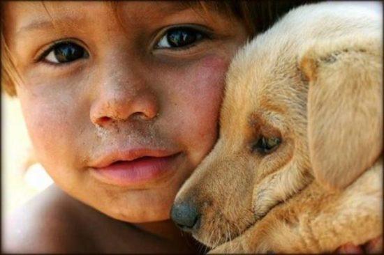 niños y bebes con perros  (8)