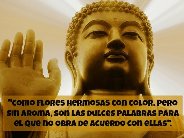 43 Imágenes con frases Sabias de Buda sobre el Amor y la ...
