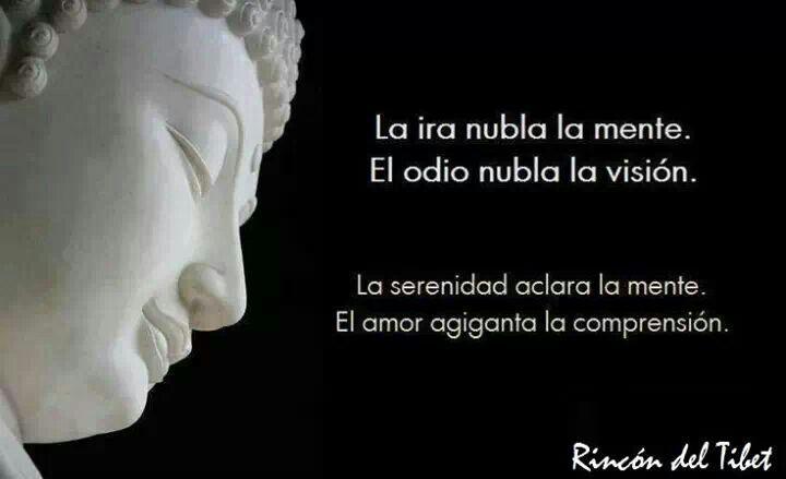 Frases De Amor Y Buda Smartfren R