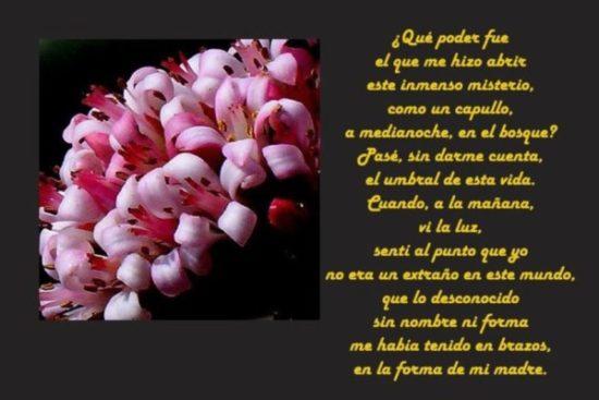 Felíz día de la Madre - frases  (4)