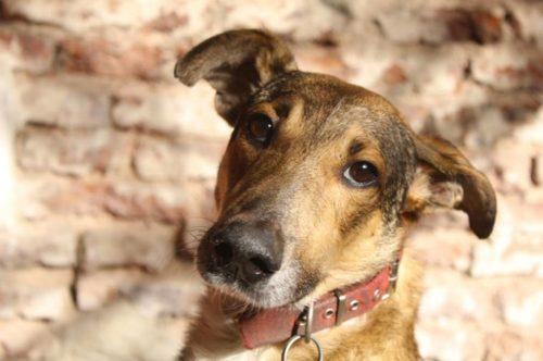 día del perro callejero  (11)