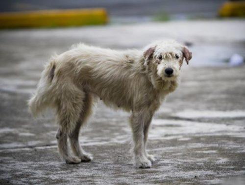 día del perro callejero  (13)