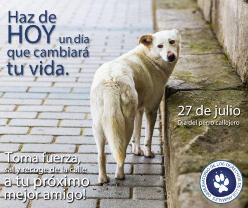 día del perro callejero  (20)
