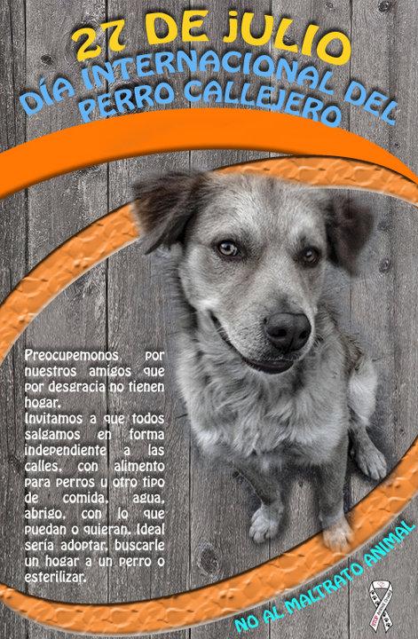 día del perro callejero  (21)