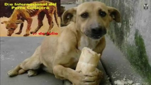 día del perro callejero  (24)