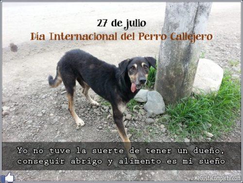 día del perro callejero  (25)