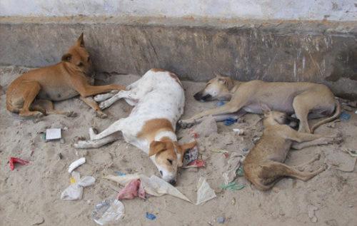 día del perro callejero  (8)