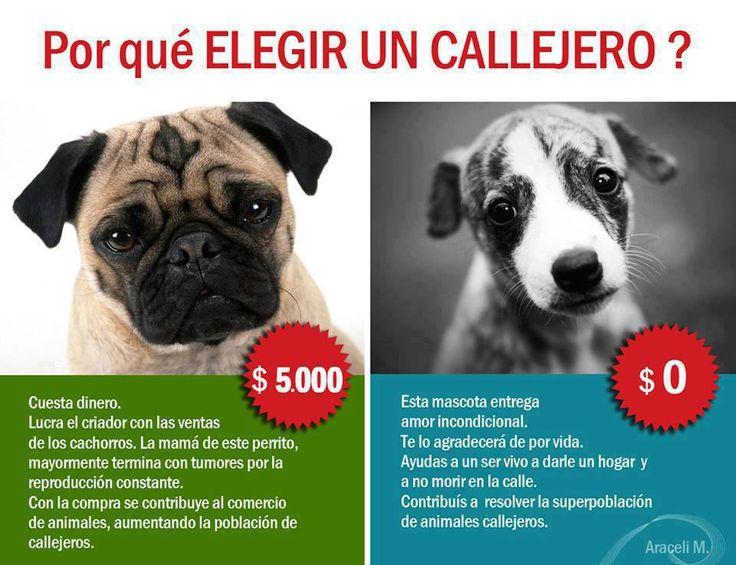 Imgenes del Da Mundial del Perro Callejero con frases