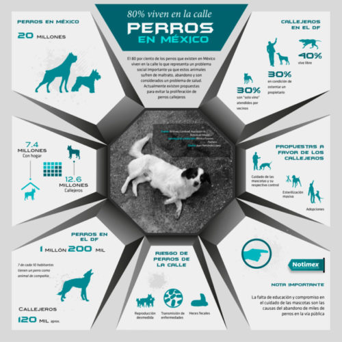infografia día del perro abandonado (6)