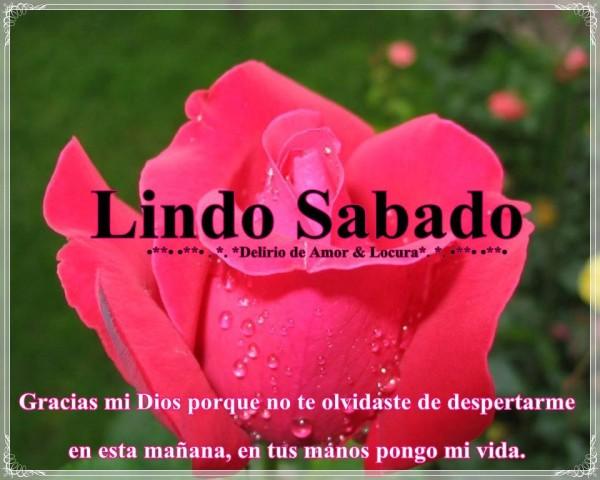 Imagenes de rosa rojas con frase de amor - Imágenes