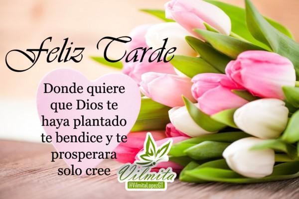 Imagenes-Cristianas-Feliz-Tarde-Donde-Quiere-que-Dios-Te-Haya-Plantado-Te-Bendecira