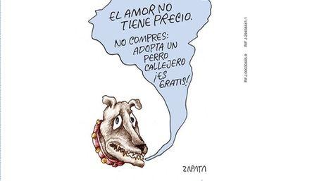 Pedro-Leon-Zapata-colaboracion-apoyocanino_NACIMA20140725_0070_6