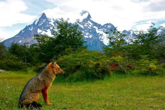 Torres del Paine paisajes, parque, flora, fauna (1)