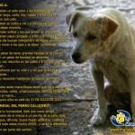 27 de Julio – Imágenes del Día Internacional del Perro Callejero