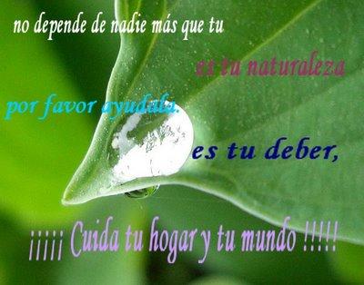 día del medio Ambiente (26)