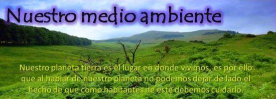 día del medio Ambiente (9)