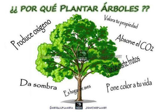 dia del medio ambiente (4)