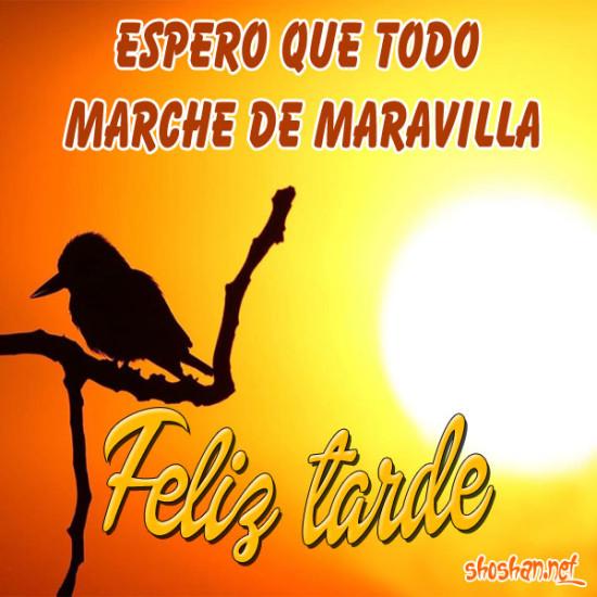 todo_de_maravilla