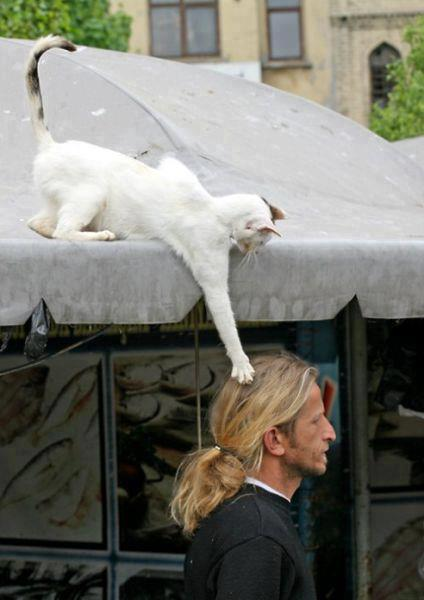 Animales - Día del Animal (4)