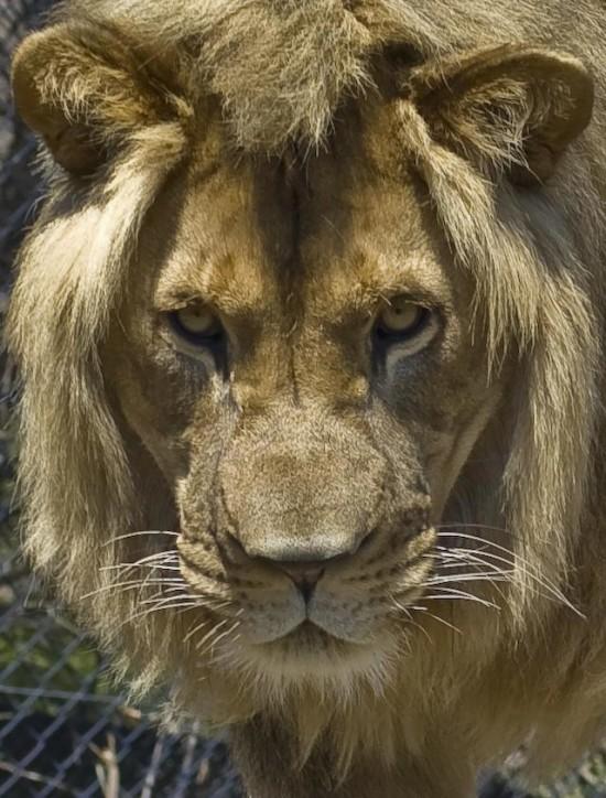Animales - Día del Animal (9)