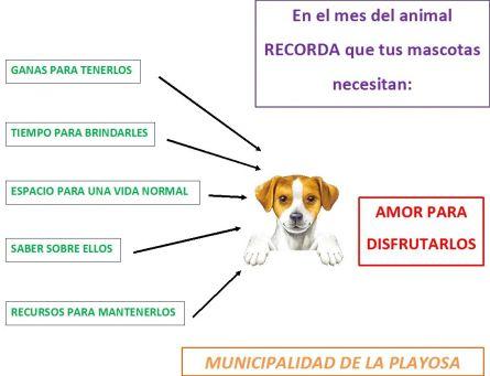 Día del Animal (13)