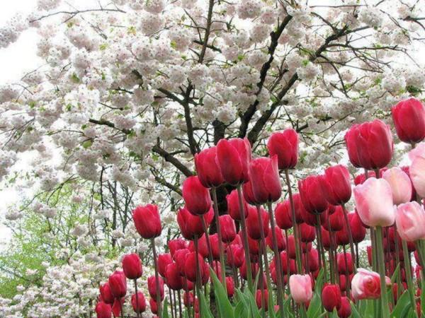 Espectaculares Paisajes Con Flores De Colores Muy Bonitas Informacion Imagenes