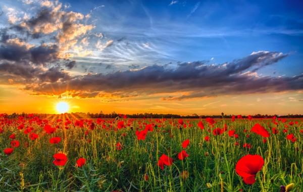 Espectaculares paisajes con flores de colores muy bonitas for Foto paesaggi naturali gratis