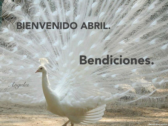 adios marzo - Bienvenido Abril - Hola abril (5)