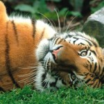 Imágenes de Animales adorables y tiernos descansando