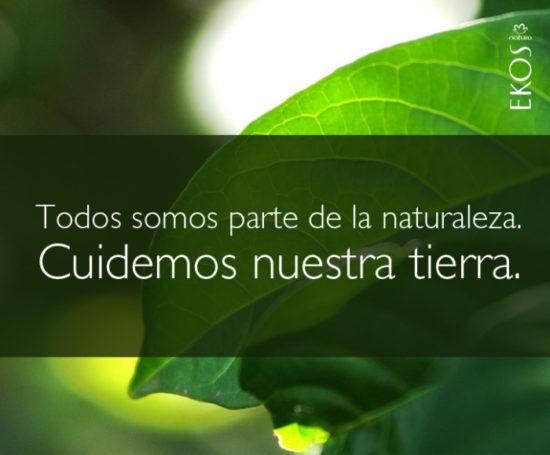 Frases e información para el Día del Medio Ambiente en