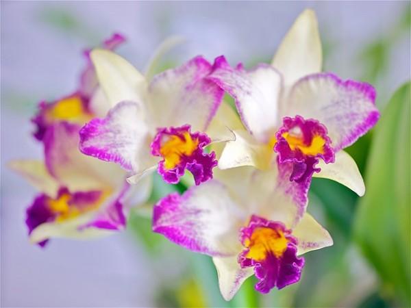 Hermosas im genes de flores exoticas y nativas - Fotos flores bellas ...