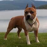 Imágenes e información de las razas de Perros guardianes