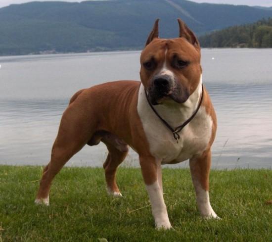 perro guardian (1)