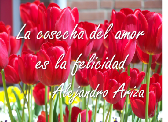 Frase_felicidad_Alejandro_Ariza