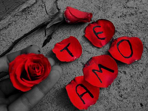 Rosas Rojas Con Frases De Amor: Imágenes De Rosas Rojas Con Frases De Amor