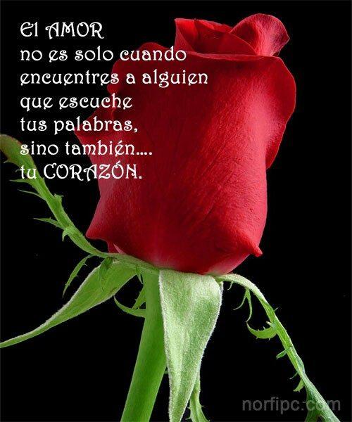 imagenes de rosas color naranja Archivos   Imagenes de Rosa